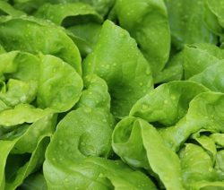 salad-771059_960_720