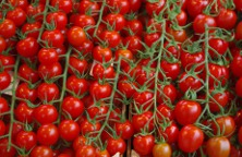 tomatoes-1337408_960_720