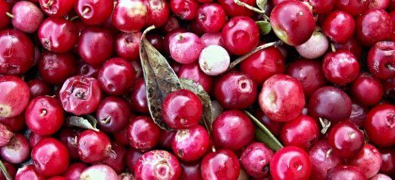 cranberries-112155_960_720