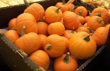 pumpkins-540242_640