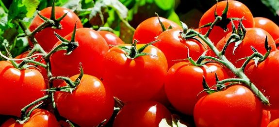 tomatoes-1280859_960_720